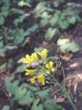 Abeja y flores y naturaleza hermosa foto de archivo
