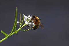 Abeja y hormiga Fotografía de archivo