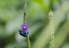 Abeja y hormiga de la orquídea Foto de archivo