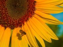 Abeja y la suya sombra 1 Imagen de archivo libre de regalías