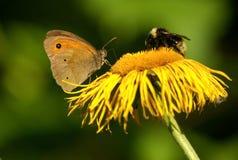 Abeja y mariposa Imagen de archivo