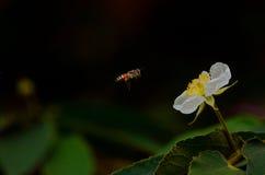 Abeja y mariposa Imagen de archivo libre de regalías
