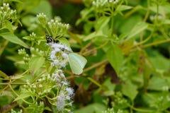 Abeja y mariposa con las flores en la polinización Imagenes de archivo