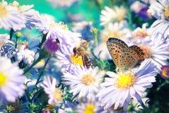 Abeja y mariposa en las flores Fotografía de archivo