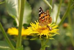 Abeja y mariposa que se sientan en una flor Foto de archivo libre de regalías