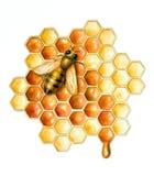 Abeja y miel Fotografía de archivo libre de regalías