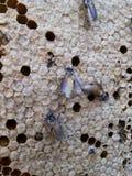Abeja y miel en el bosque Fotografía de archivo libre de regalías