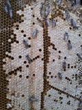 Abeja y miel en el bosque Fotos de archivo