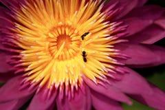 Abeja y polen Foto de archivo