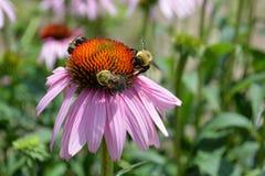 3 abejas Fotografía de archivo