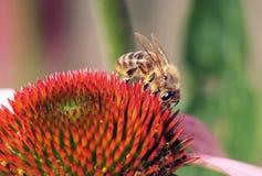 abejas Fotografía de archivo libre de regalías