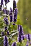 Abejas alrededor de las flores Imagen de archivo