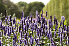 Abejas alrededor de las flores Imagenes de archivo