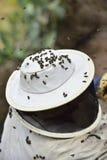 Abejas alrededor de un apicultor que mira una colmena Imagen de archivo libre de regalías