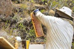 Abejas alrededor de un apicultor que mira una colmena Fotos de archivo libres de regalías