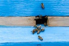 Abejas con la miel Imagenes de archivo