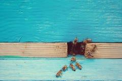 Abejas con la miel en la entrada Foto de archivo
