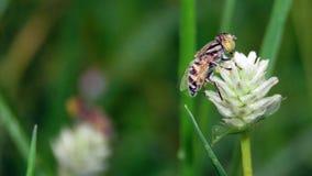 Abejas con las flores en la hierba Imágenes de archivo libres de regalías