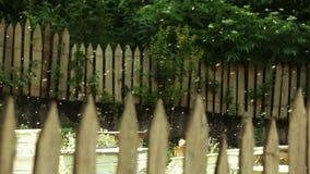 Abejas de la colmena detrás de la cerca almacen de metraje de vídeo