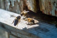 Abejas de la miel al lado del primer viejo de la colmena Imágenes de archivo libres de regalías