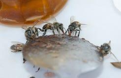 Abejas de la miel (Apis) Foto de archivo