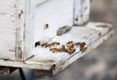 Abejas de la miel en colmena Fotos de archivo