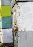 Abejas de la miel en colmena Imagenes de archivo