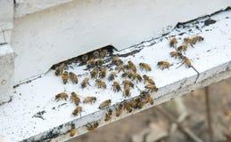 Abejas de la miel en colmena Fotografía de archivo