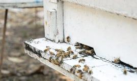 Abejas de la miel en colmena Fotografía de archivo libre de regalías
