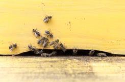 Abejas de la miel en colmena amarilla Fotografía de archivo libre de regalías