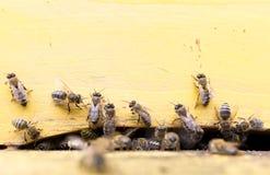 Abejas de la miel en colmena amarilla Imagenes de archivo