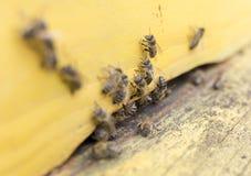Abejas de la miel en colmena amarilla Imagen de archivo libre de regalías