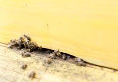 Abejas de la miel en colmena amarilla Fotos de archivo