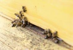 Abejas de la miel en colmena amarilla Foto de archivo libre de regalías
