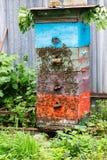 Abejas de la miel en colmena en el jardín Fotos de archivo