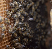 Abejas de la miel en el colmenar casero Imágenes de archivo libres de regalías
