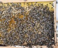 Abejas de la miel en el colmenar casero Imagen de archivo libre de regalías