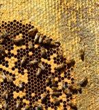 Abejas de la miel en los peines de la cera, al aire libre Imagenes de archivo
