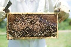 Abejas de la miel en una bandeja de miel Imagen de archivo