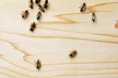 Abejas de la miel en una colmena Fotos de archivo libres de regalías