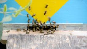 Abejas de la miel en vuelo almacen de video