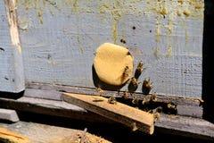 Abejas de la miel que pululan alrededor de su colmena Imagen de archivo libre de regalías