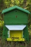 Abejas de la miel que pululan en una colmena Foto de archivo libre de regalías