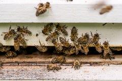 Abejas de la miel que pululan y que vuelan alrededor de su colmena Foto de archivo libre de regalías