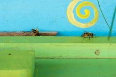 Abejas de la miel que pululan y que vuelan alrededor de su colmena Foto de archivo