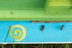 Abejas de la miel que pululan y que vuelan alrededor de su colmena Fotografía de archivo