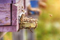 Abejas de la miel que pululan y que vuelan alrededor de su colmena Fotos de archivo