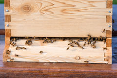 Abejas de la miel que pululan y que vuelan alrededor de su colmena Imagen de archivo libre de regalías