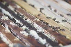 Abejas de la miel que se sientan en un marco de madera de la colmena Foto de archivo libre de regalías