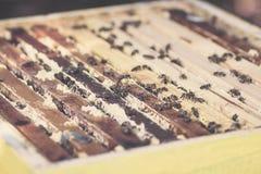 Abejas de la miel que se sientan en una colmena de madera Foto de archivo libre de regalías